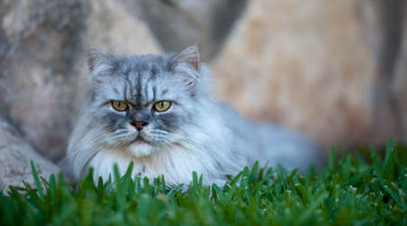 Cat playing on the grass close up
