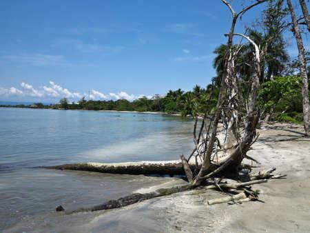 Tree and beach in Panama