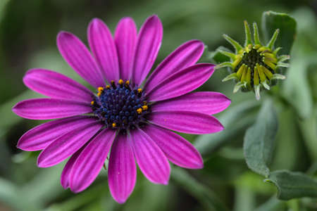Beautiful chamomile flowers in nature Stock Photo