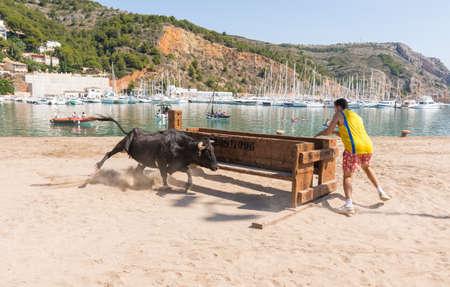 JAVEA, SPAIN - SEPTEMBER 2  A heifer chasing one  guy during the festivity  Nuestra Senora de Loreto  on September 2, 2013 in Javea, Spain  Editorial