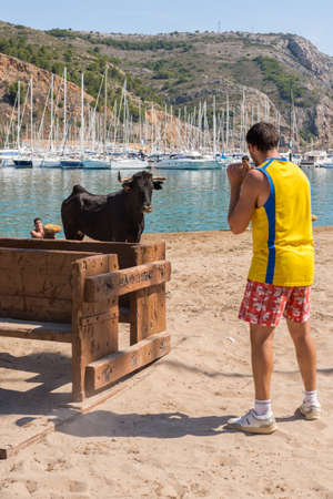 JAVEA, SPAIN - SEPTEMBER 2  A heifer in front of one  guy during the festivity  Nuestra Seora de Loreto  on September 2, 2013 in Javea, Spain