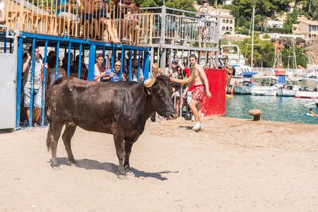 JAVEA, SPAIN - SEPTEMBER 2  A heifer waiting for guys during the festivity  Nuestra Senora de Loreto  on September 2, 2013 in Javea, Spain