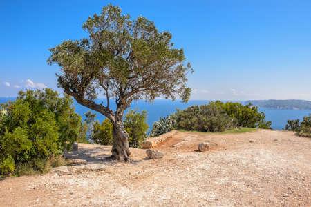 Tree and views of Javea town from San Antonio Cape, Spain  Stock Photo