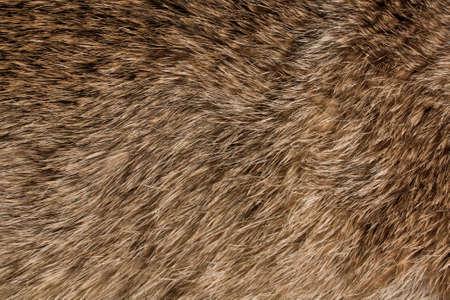 Animal fur texture photo