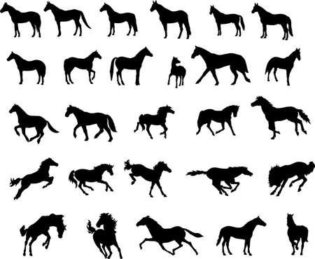 garanhão: Cavalos Ilustra��o