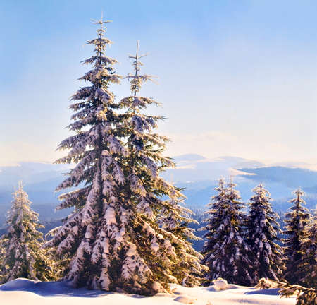 Postal card with Merry Christmas, Winter Landscape photo