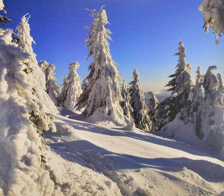 h�tte schnee: Postkarte Winterwald