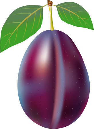 soft sell: Plum with stem and green leaf.