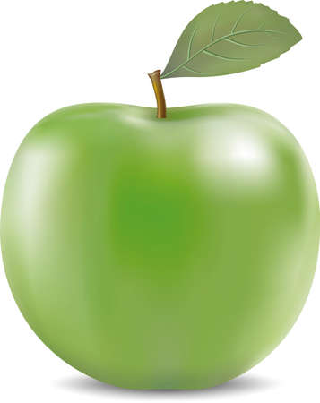 Vector illustration of detailed big green apple isolated on white Vectores