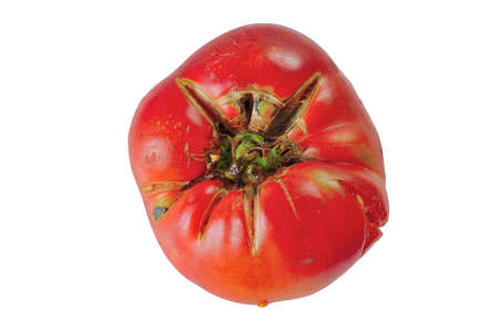 overripe: overripe red tomato isolated on the white