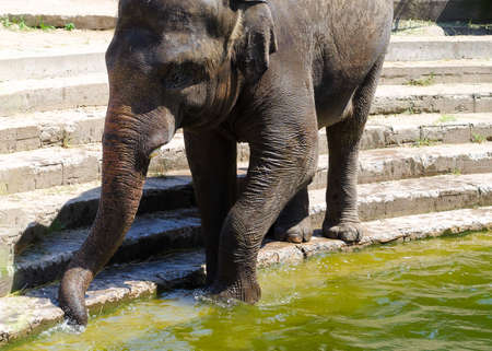 Elephant goes into the water