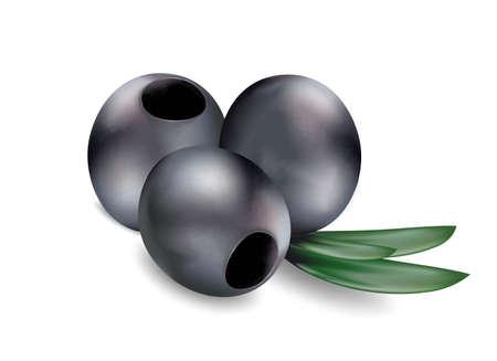 흰색 배경에 잎 잘 익은 검은 올리브