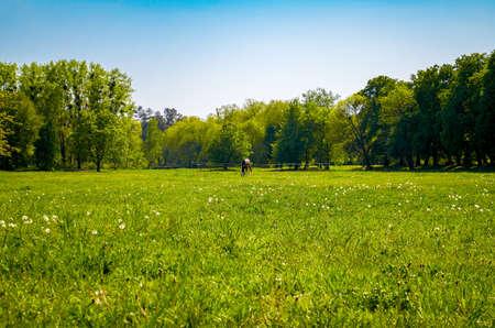 Horse graze in a grassy field