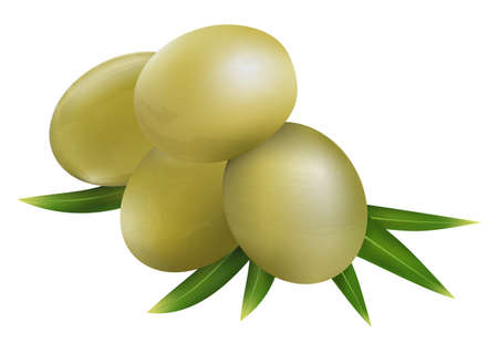 Olive fruit and olive leaves on a white background 일러스트
