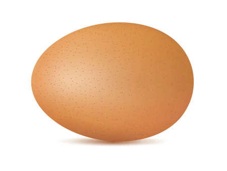 Vector single realistic animal egg. Chicken egg isolated with soft shadows on white background Illustration