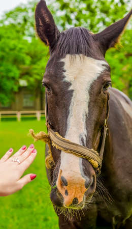 Girl pulls a hand towards the horse