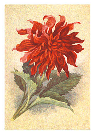Painting reproduction of the beautiful flowers