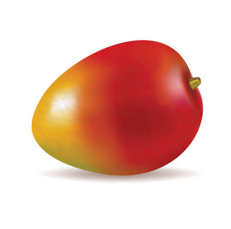 Ripe fresh mango vector illustration