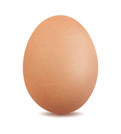 chicken egg isolated on white background vector illustration