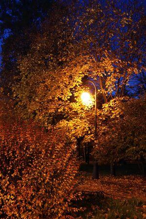 Yellow lantern at night in autumn park alley