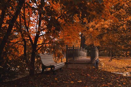white bench near bridge in a dark autumn park many leaves on the ground