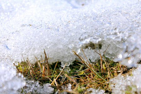thawed: Spring melting ice on the ground. Grass sprouts under the melting ice. Earth day.