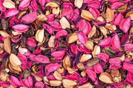Beautiful background of dry flowers