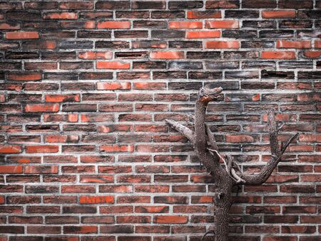 limp: Dried twig against old and dirty brick wall Stock Photo