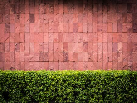 fench: Brick wall and fench bush for background Stock Photo