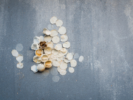 unidentified: A new life is born, eggshell of unidentified animal on the concrete rough wall