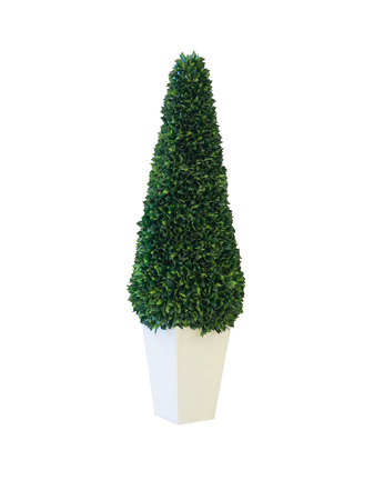 furnish: Tree in pot isolated on white background with clipping path (ready for make selection)