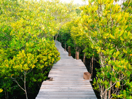 prong: Walkway with wooden bridge through mangrove forrest, Golden Meadow Prong or Thung Prong Thong (Thai language) at Rayong, Thailand (soft focus) Stock Photo