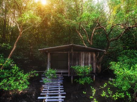 wooden hut: Little old wooden hut over swamp among grove wood, sunset scene