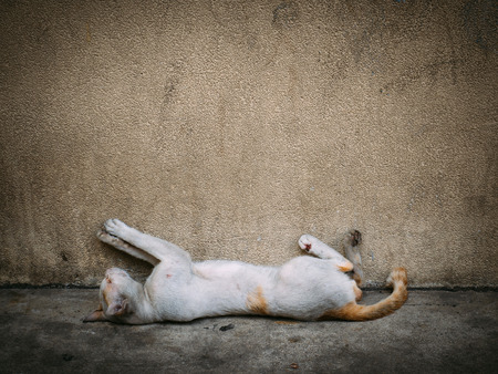 Poor homeless cat sleep on the concrete floor against the wall