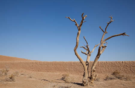 lonesome: Lonely dry tree in the desert against blue sky