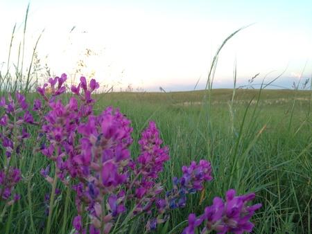 大草原にある野生の花。