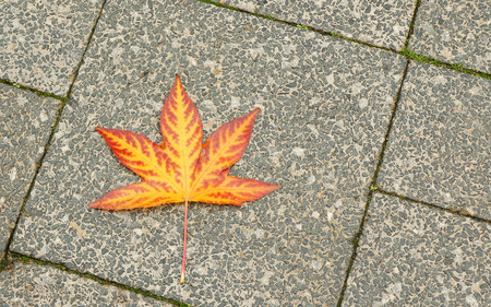 A colorful autumn leaf on the pavement Banco de Imagens