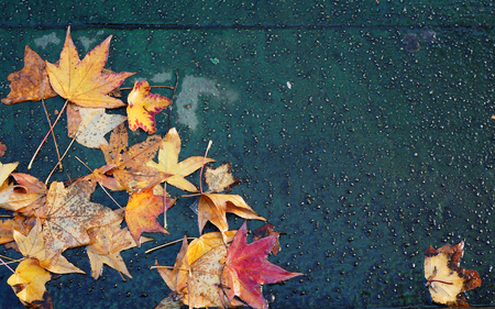 Colorful maple leaves on wet pavement Banco de Imagens