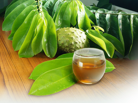 Soursop Leaves, Fruit & Tea Banco de Imagens