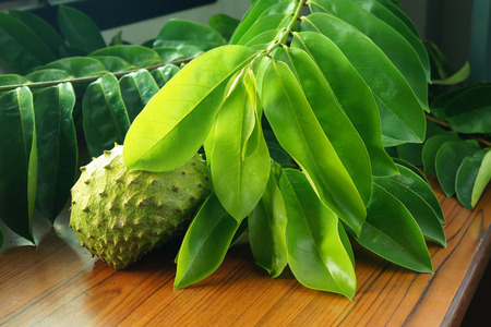 Branch of Soursop leaves & fresh Fruit
