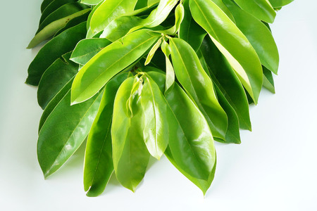 Branch of Soursop leaves on white background