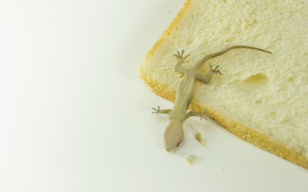 Dead lizard (Gecko) lying on my bread - Pest control concept Banco de Imagens