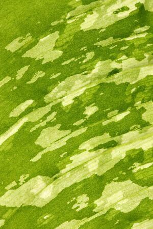 Abstract background - detail of backlit green leaf