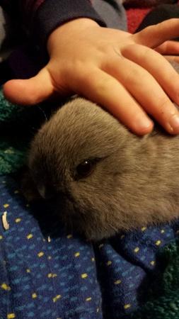 petting: childs hand petting a small rabbit