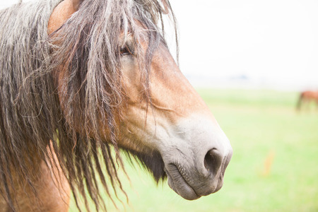 European horse out in the wild Stock Photo