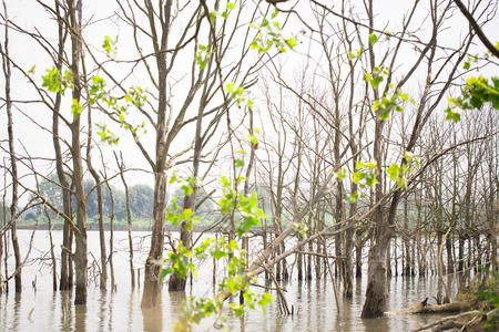 prototypical: Lakeside trees in the water Stock Photo