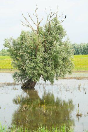 verticals: Swamp tree