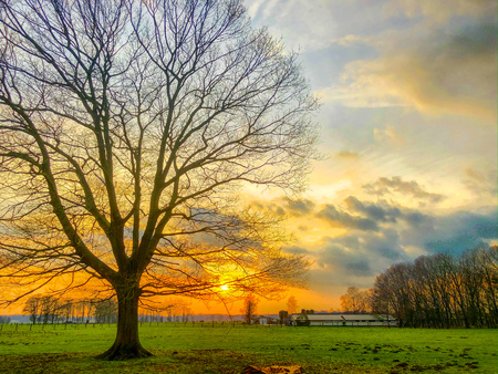 Dramatic and colorful sunrise or sunset sky over a grassy green farmfield lined by trees