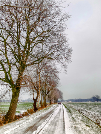 Snowed road under a grey sky in a rural countryside winter landscape between the meadows and the trees 스톡 콘텐츠