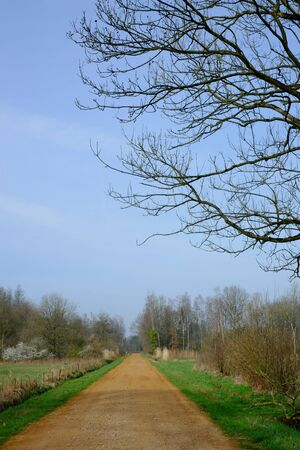 Straight rural pathway with green plants and tree on both the side against blue sky Reklamní fotografie